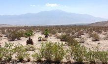 72-534 Lyons Blvd. Desert Hot Springs, CA 92241